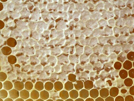 Зрелый мёд в запечатанных сотах