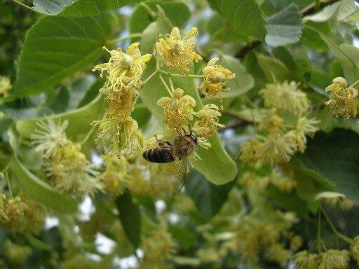 zdorovie-semii-pchel